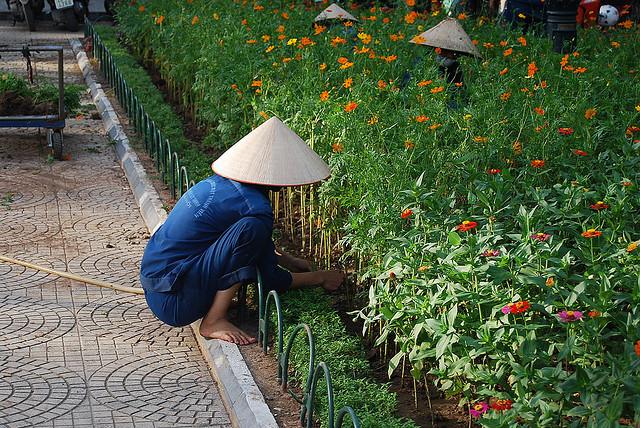 Arreglando las flores de Hanoi